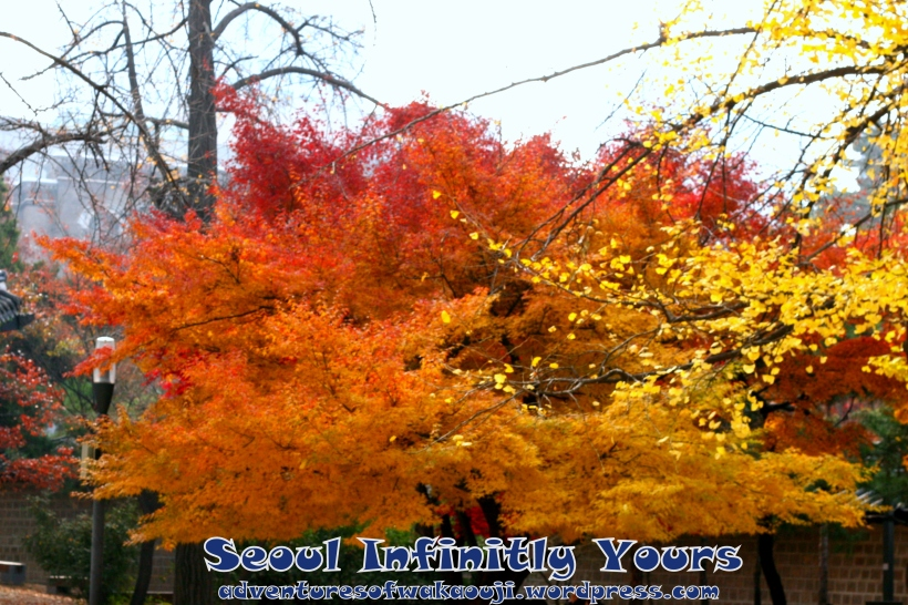 South Korea Fall 2012